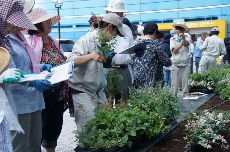 福岡タワーに市民の皆さんと花壇を作りました